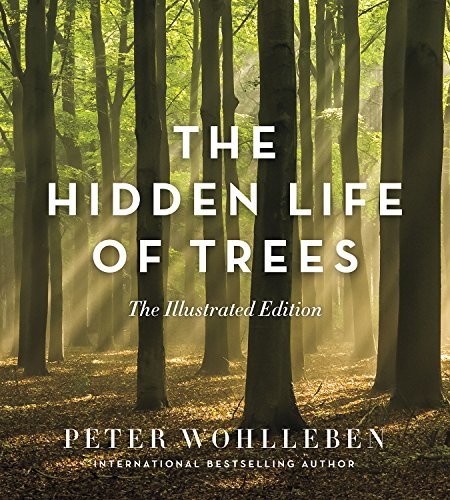 The Hidden Life ofTrees: The Illustrated Edition