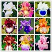 50pcs / sac couleurs mélangées Graines Iris fleurs, graines de fleurs rares barbus graines d'iris, plantes Nature fleur d'orchidée de bricolage pour jardin
