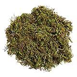 KESYOO 3 Paquets de Mousse de Plantes Artificielles Vertes pour Plantes Plantes en Plastique pour Lextérieur pour La Décoration de La Maison de Jardin Patio (Environ 60G)