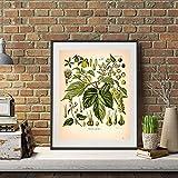 WQHLSH Rétro Plantes Illustration Illustration Art Imprimer enthousiasme botanique...