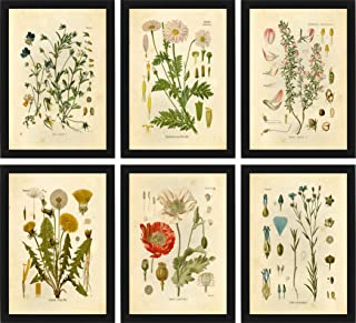 Ink Inc Botanical Prints Wildflower Prints Floral Wall Art – Set of 6-8×10..