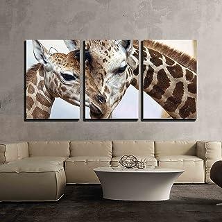 Amazon Com Safari Living Room Decor
