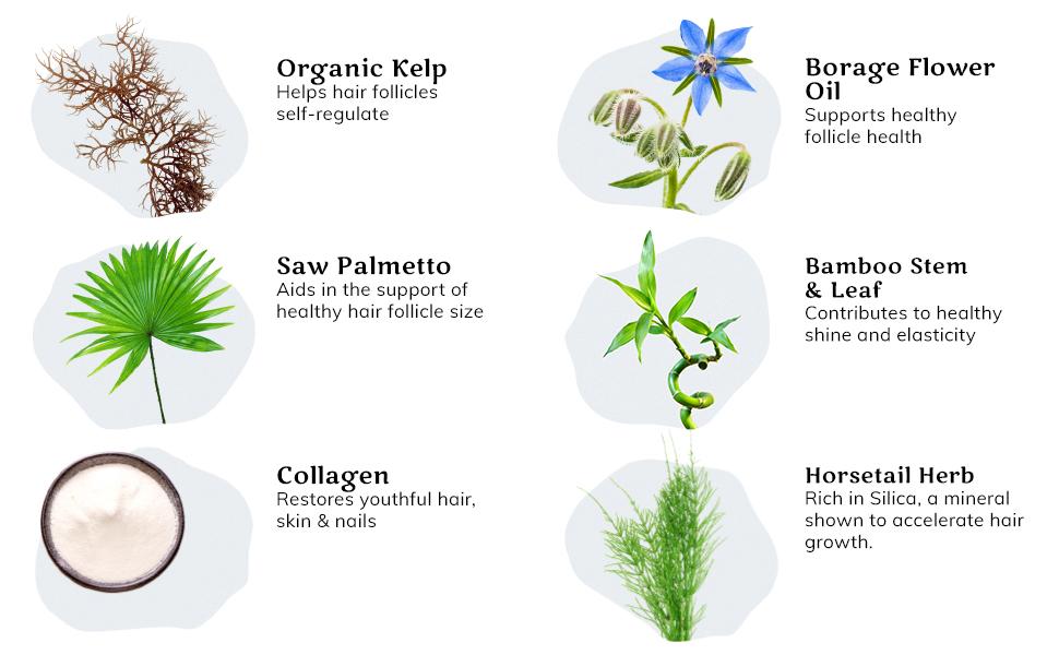 Organic kelp, borage flower, saw palmetto, collagen, horsetail herb, and bamboo stem leaf