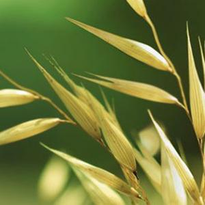 ACTIVE NATURALS Brand developed a special milling process to create colloidal oatmeal