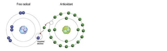 free radicals, antioxidant, antiaging, turmeric, vitamin c, carbon 60