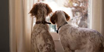 puppy bells for door