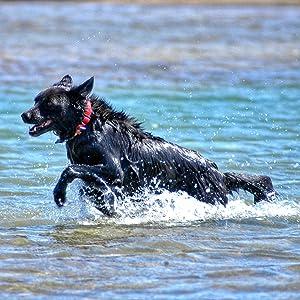 Waterproof Pet ID Tag