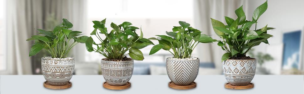 EPGardening planter experts for plant lovers