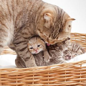 kittens values