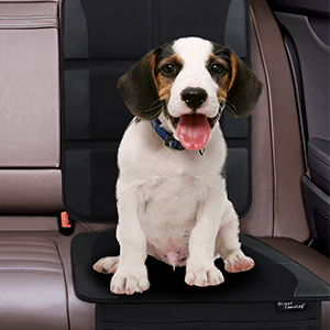 car seat protector for dog