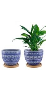 flower pot indoor