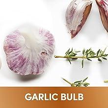 Anti inflammatory supplement turmeric ginger bioperine garlic curcumine capsules