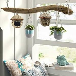Perfect hummingbird nest in your yard