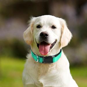 pet dog collar