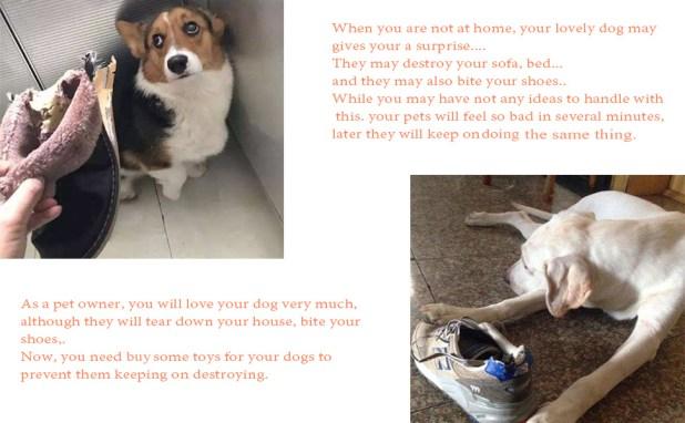 dog destroy your house