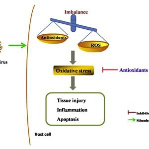 antioxidants, antiaging