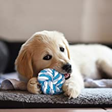 puppy toys for small dogs