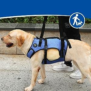 Coodel dog lift harness