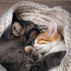 Katzenminze, Katzen Entspannung, Mehr-Katzenhaushalt, Familie, Kratzen, Beißen,Markieren, natürlich