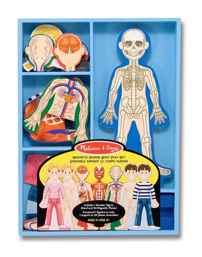 Amazon.com: Melissa & Doug Magnetic Human Body Anatomy ...