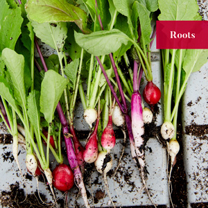 The Chef's Garden: A Modern Guide to Common and Unusual Vegetables--with Recipes, Farmer Lee Jones