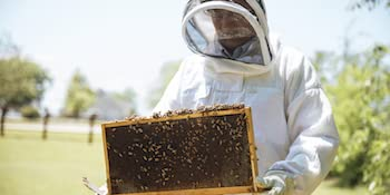 honey natural healthy raw unfiltered pasteurized hive beekeeping beekeeper beehive beesuit