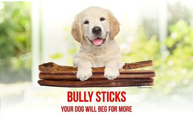 jumbo bully sticks downtown pet supply