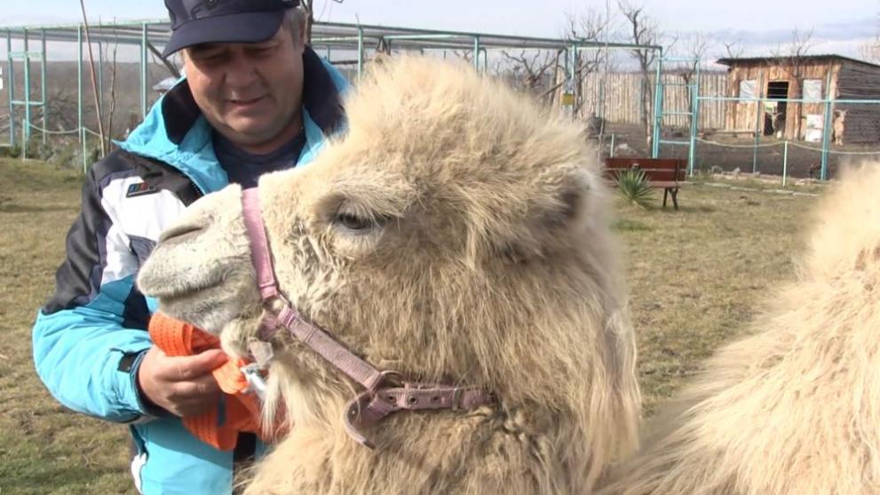 камила Бургас