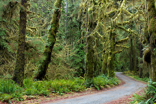 Lower Queets River Road