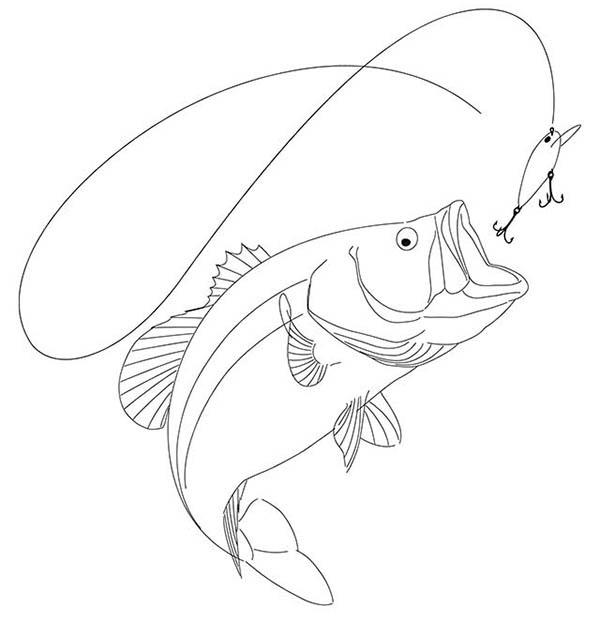 bass coloring