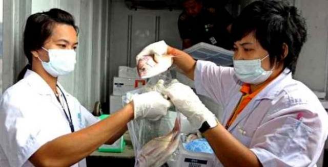 Hallan en Fukushima un pez con un nivel de radiactividad 7000 veces superior a la norma