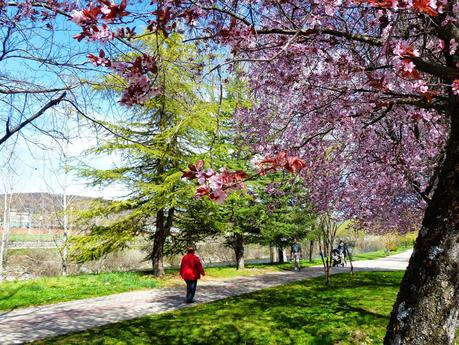 Resultado de imagen para primavera florida