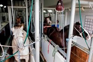 Le Costa Rica expérimente un remède de cheval contre le coronavirus
