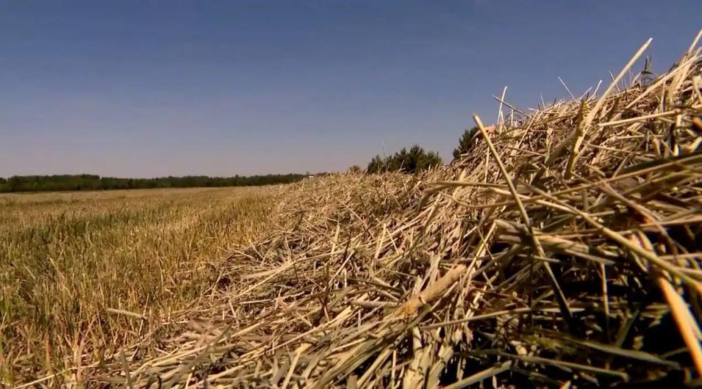 Sécheresse: les agriculteurs se mobilisent