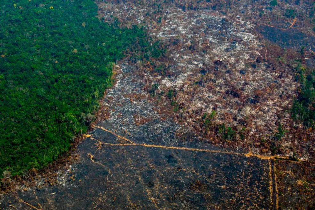 Au Brésil, une loi sur la régularisation foncière pourrait aggraver la déforestation