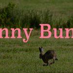 Funnybunny ファニーバニー 歌詞の意味と世界観は 解釈を考察 みかんと傘とコッペパン