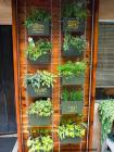 conjungle-verticalplanters