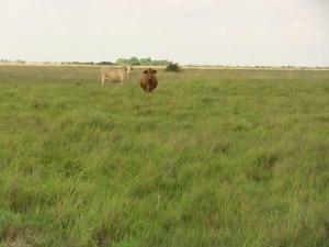3,400 +/- Acres  Bolling Ranch  Calhoun County