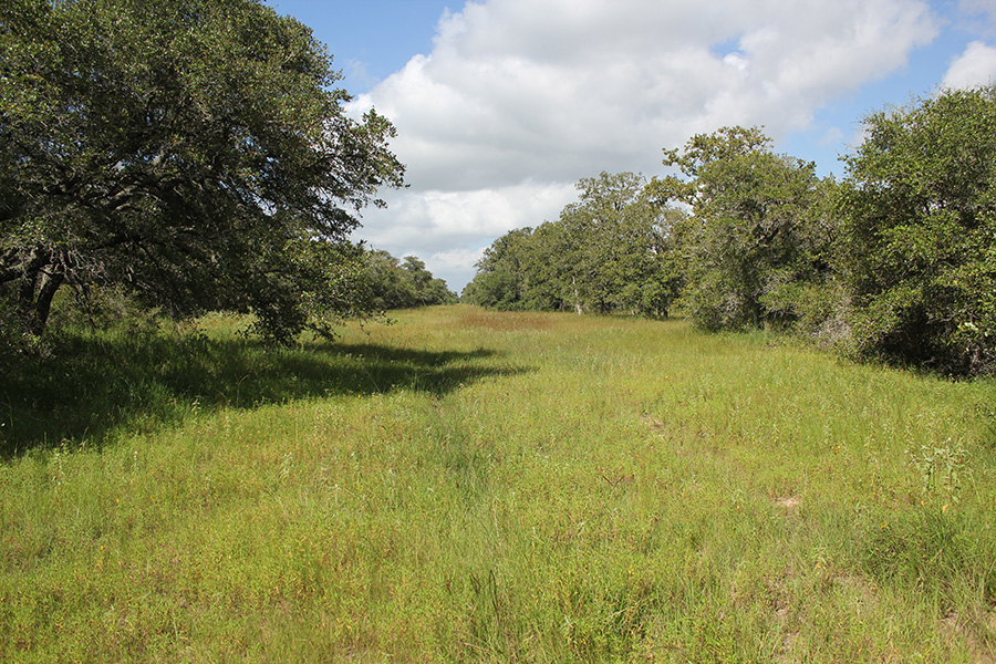 252 Acres For Sale Lavaca County
