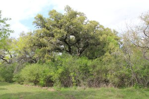 190 Acres For Sale – Bee County
