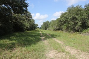 145 Acres For Sale –  Beck Rd Ranch