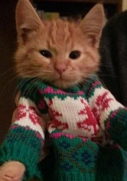 Top 10 Cats Wearing Christmas Jumpers Paperblog