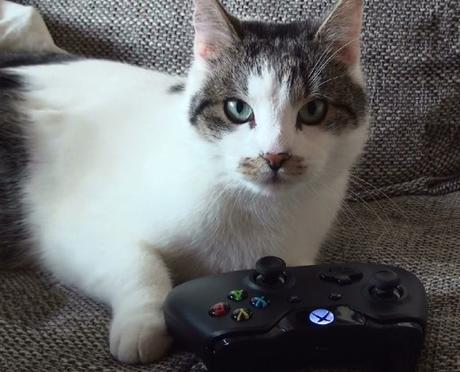 Top 10 Nerdy Xbox Fanboy Cats Paperblog