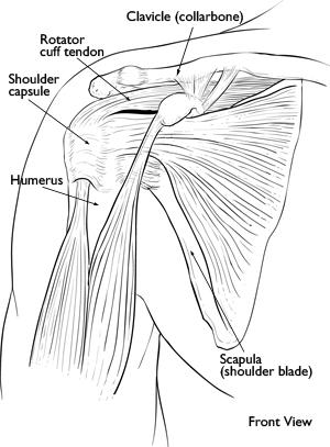 Frozen Shoulder: Causes and Treatment  Paperblog