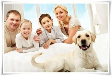 pets in your holiday home to accept them or n L WQMSa8 - Is It a Good Idea to Allow Pets
