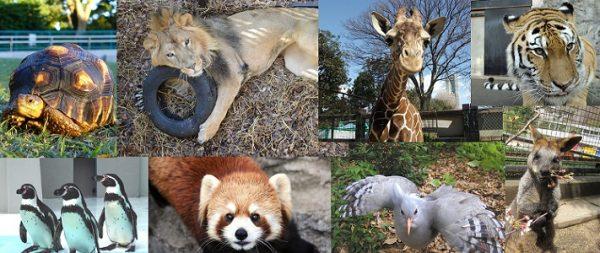 入園料0円!無料の動物園が、あなたの地域にも、あるかも…