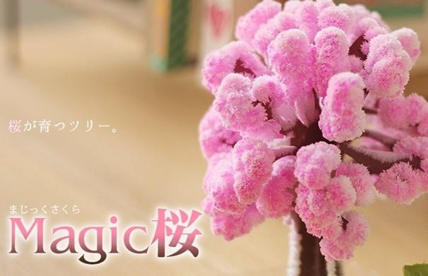 おうちで花見! 不思議なマシック桜 で小さな幸せを味わってみては…