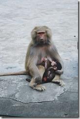 allaiter son bébé