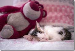 hygiène chat bébé