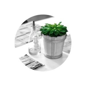 plante-ronde